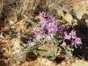 pleasant-creek-half-day-ride-spring-flowers